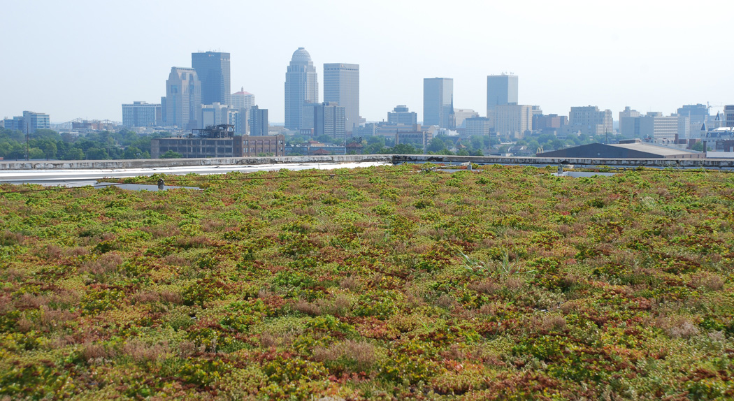 Forester Center Green Roof